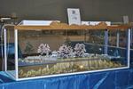 H23 みんなの広場 第4期「海のジオラマ展」 002.jpg
